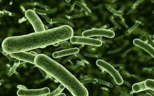 โรคแบคทีเรียกินเนื้อ
